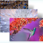 Beautiful Birds theme pack for Windows 7