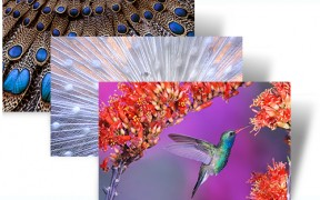 Beautiful Birds theme pack for Windows 7